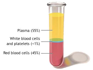 Krvná plazma
